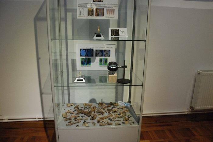 expozitie_muzeul_evolutiei (17)