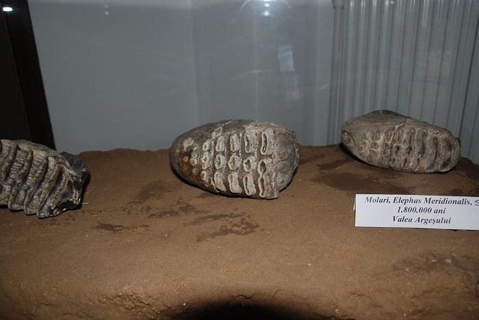 expozitie_muzeul_evolutiei (18)