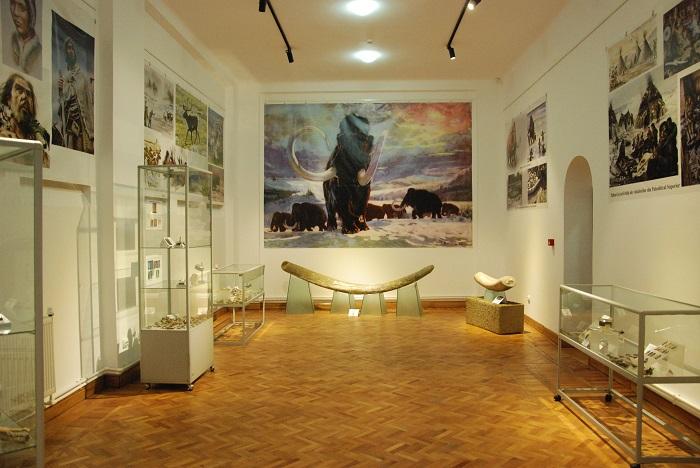 expozitie_muzeul_evolutiei (2)