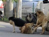 Viceprimarul Cristian Stan, demersuri noi în privința câinilor comunitari din Târgoviște