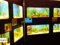 Galerie foto: ZOO Târgoviște, cea mai recentă realizare: pavilion acvaristic cu peste 100 de specii!