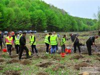 Direcția Silvică Dâmbovița: Acțiune de împădurire la Mănești (foto)
